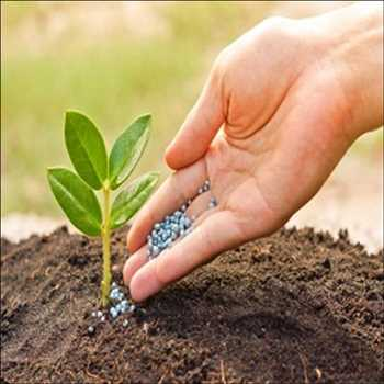 Mercado global de fertilizantes fosfatados