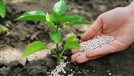 Mercado global de fertilizantes iniciales